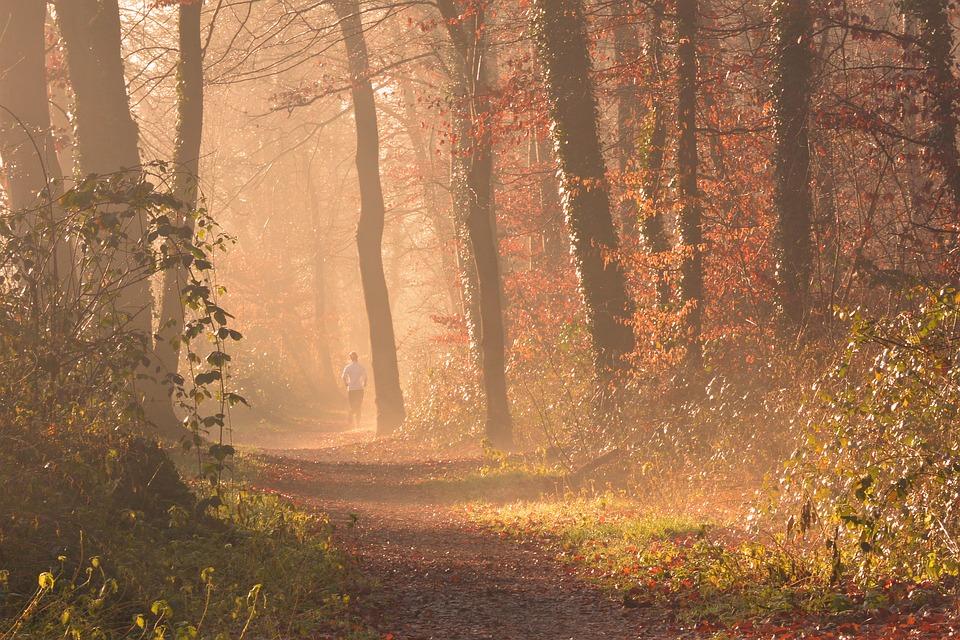 Waldwege zum Jogging